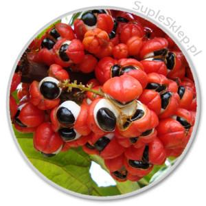 enery memory calivita-naturalne suplementy-naturalna guarana-guarana dzia?anie-guarana calivita-naturalna kofeina